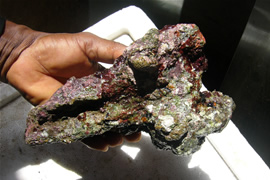 Live Marine Rocks From Ghana